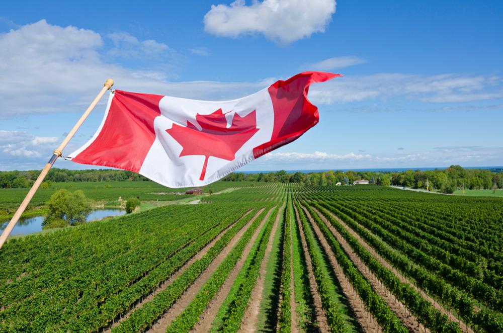 Muncitori in agricultura CANADA