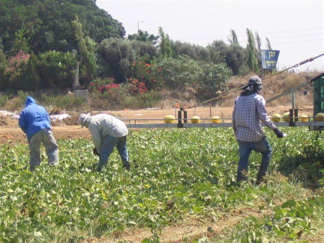 עובדי חקלאות